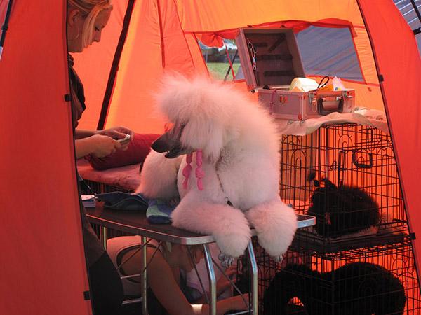 Koiranäyttelyssä