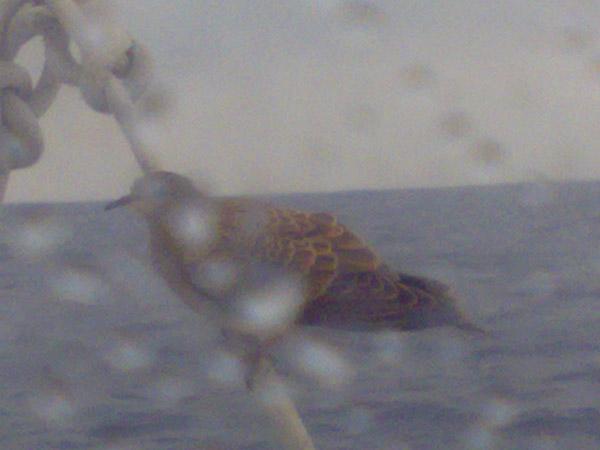 Lintu matkalla Lanzarotelle
