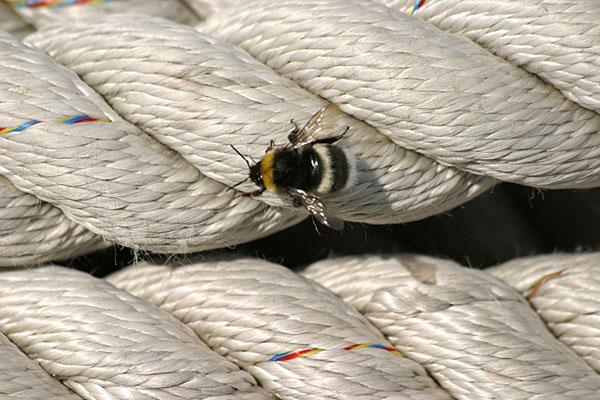 Merimiestaito: Köydenpäitä rihmomaan